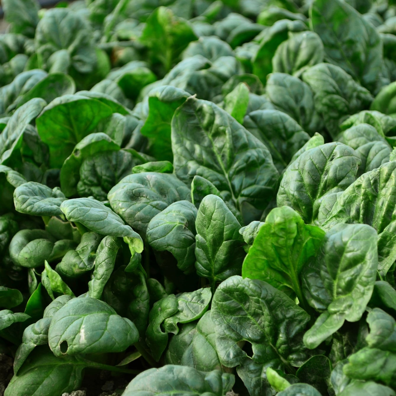 La Ronde des Légumes