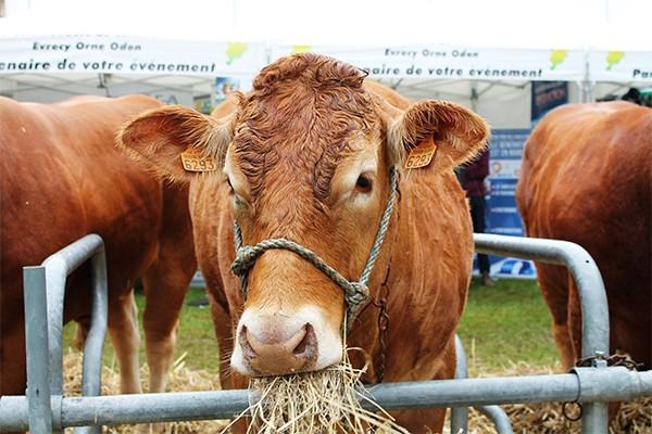 Boeuf en fete - Jeunes Agriculteurs du Calvados