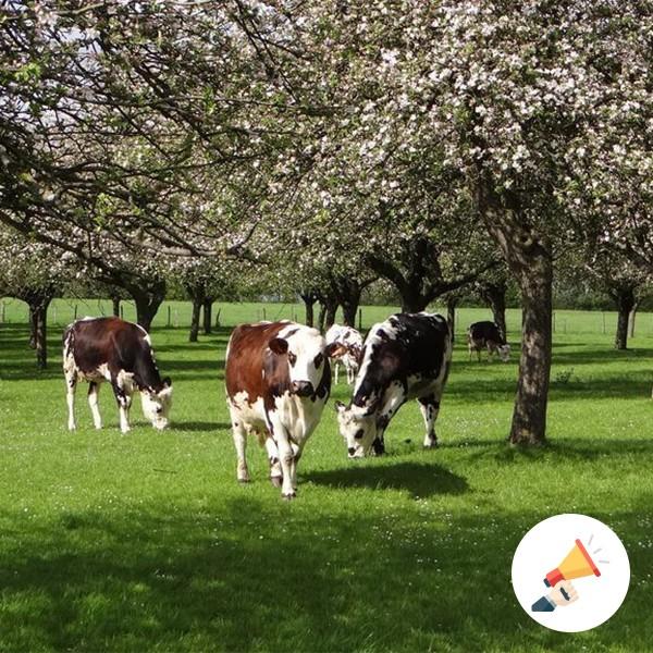 Des Nouvelles de la Normandie - Jeunes Agriculteurs du 14